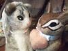 猫とシマリス